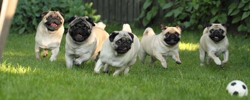 Vasemmalta: Tinker, Puppe, Ming, Yume ja Kille