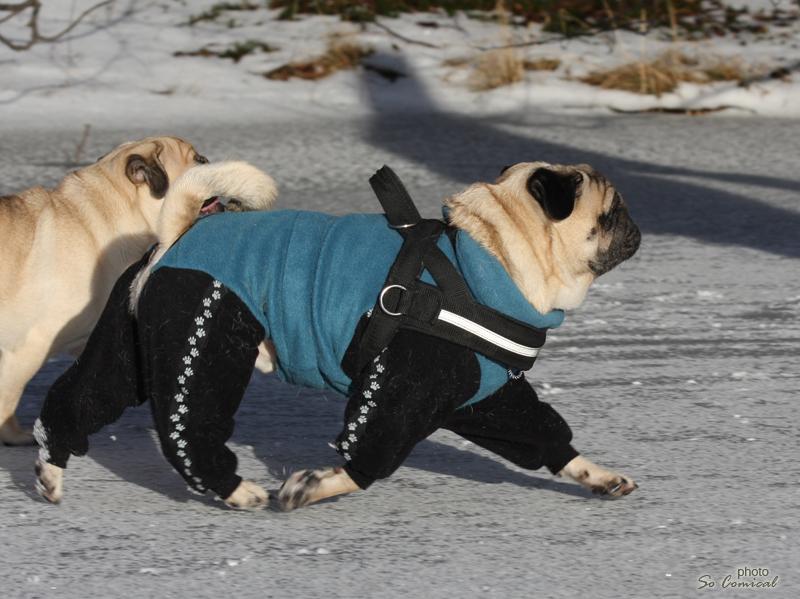 Top Canis-merkkinen fleece-haalari Fazerilla.