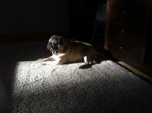 Fazer löytää aina ikkunasta tulevat auringonsäteet - ja nukkumapaikka siirtyy auringonläiskän mukana.