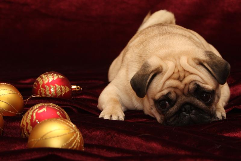 Madde ja joulupallot, kuva on vuodelta 2007