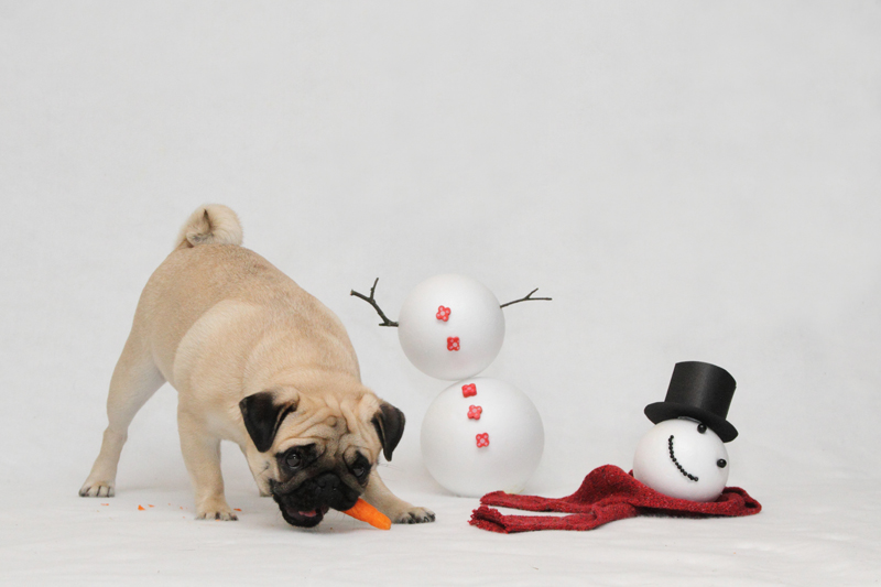 Yume ja lumiukko. Tämä kuva päätyi tämän vuoden joulukortteihimme.