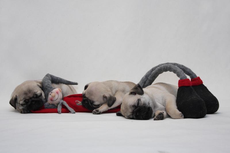 """""""Soihdut sammuu, kaikki väki nukkuu..."""""""